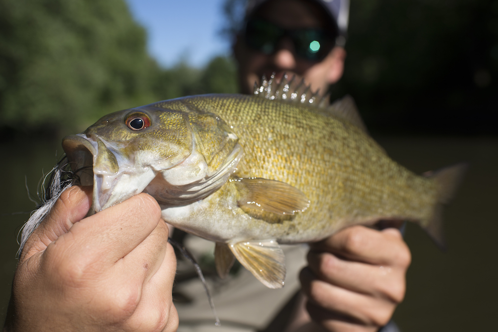 How To Catch Bass On The Fly With Topwater Poppers
