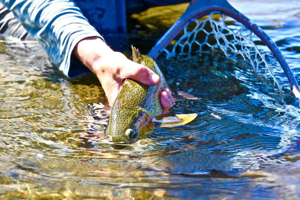 Finding Fish When The Flows Are Down