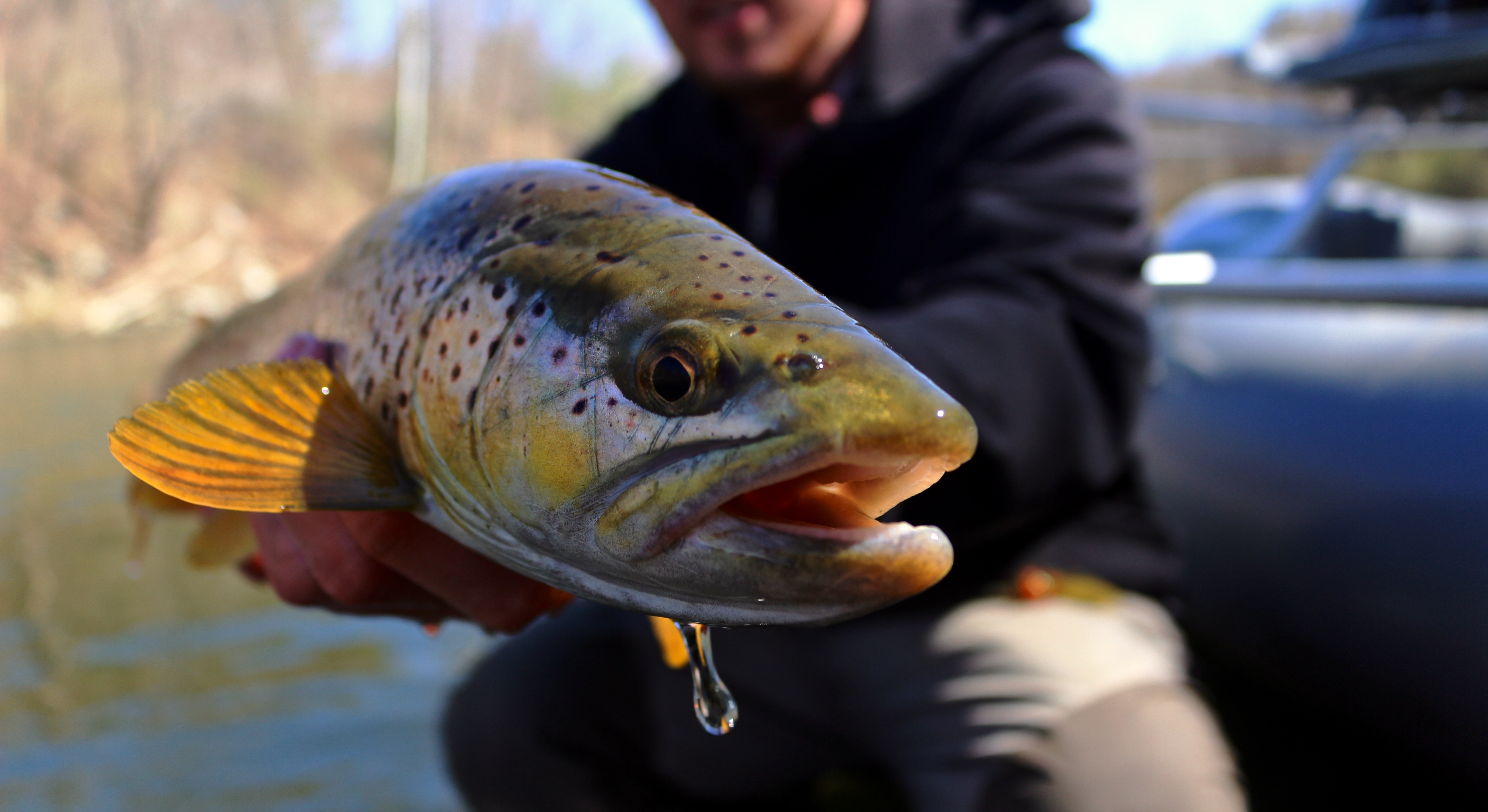 4 Ways to Spice Up Your Local Trout Stream