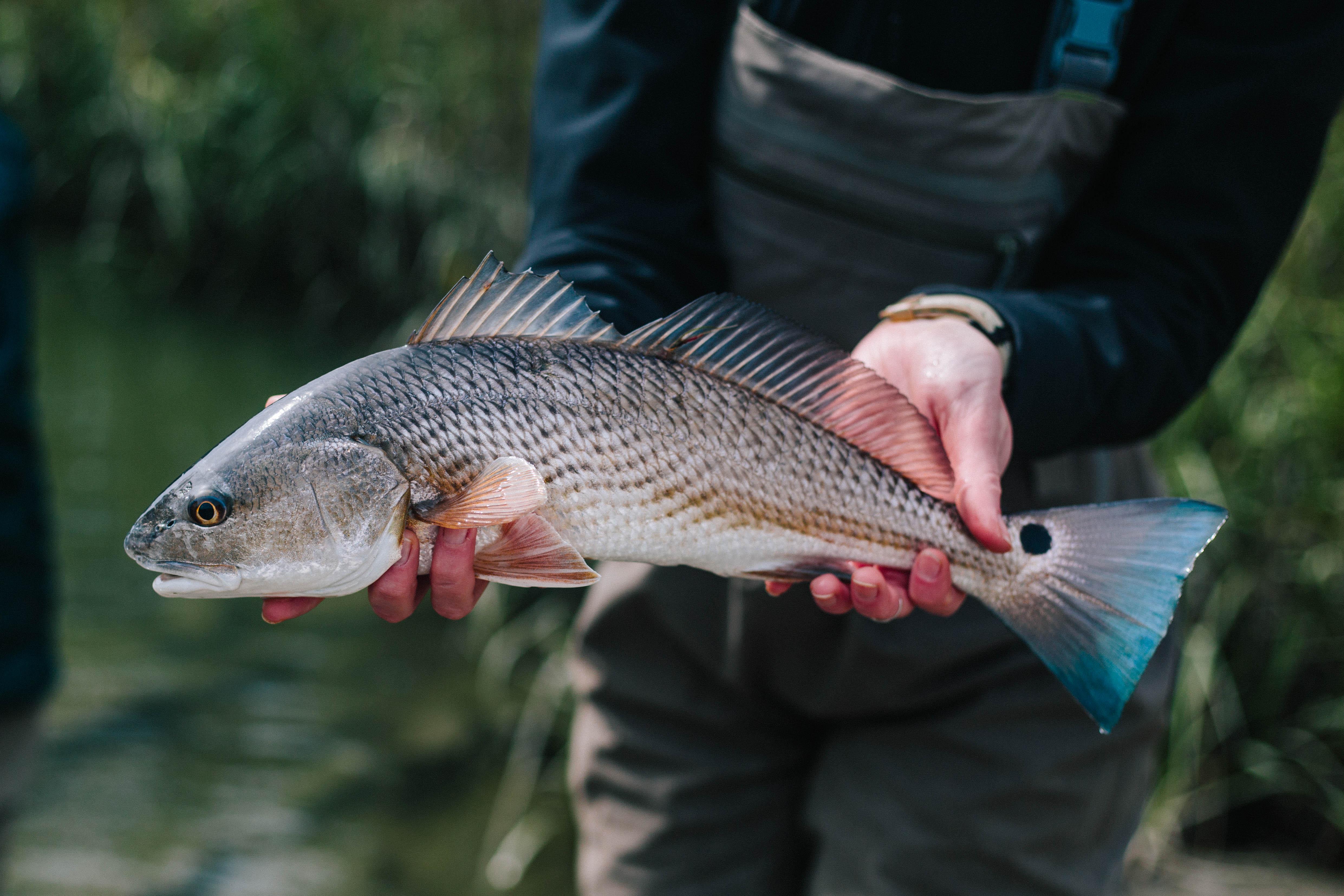 Catching Low Tide Redfish with FreshSalt Fishing