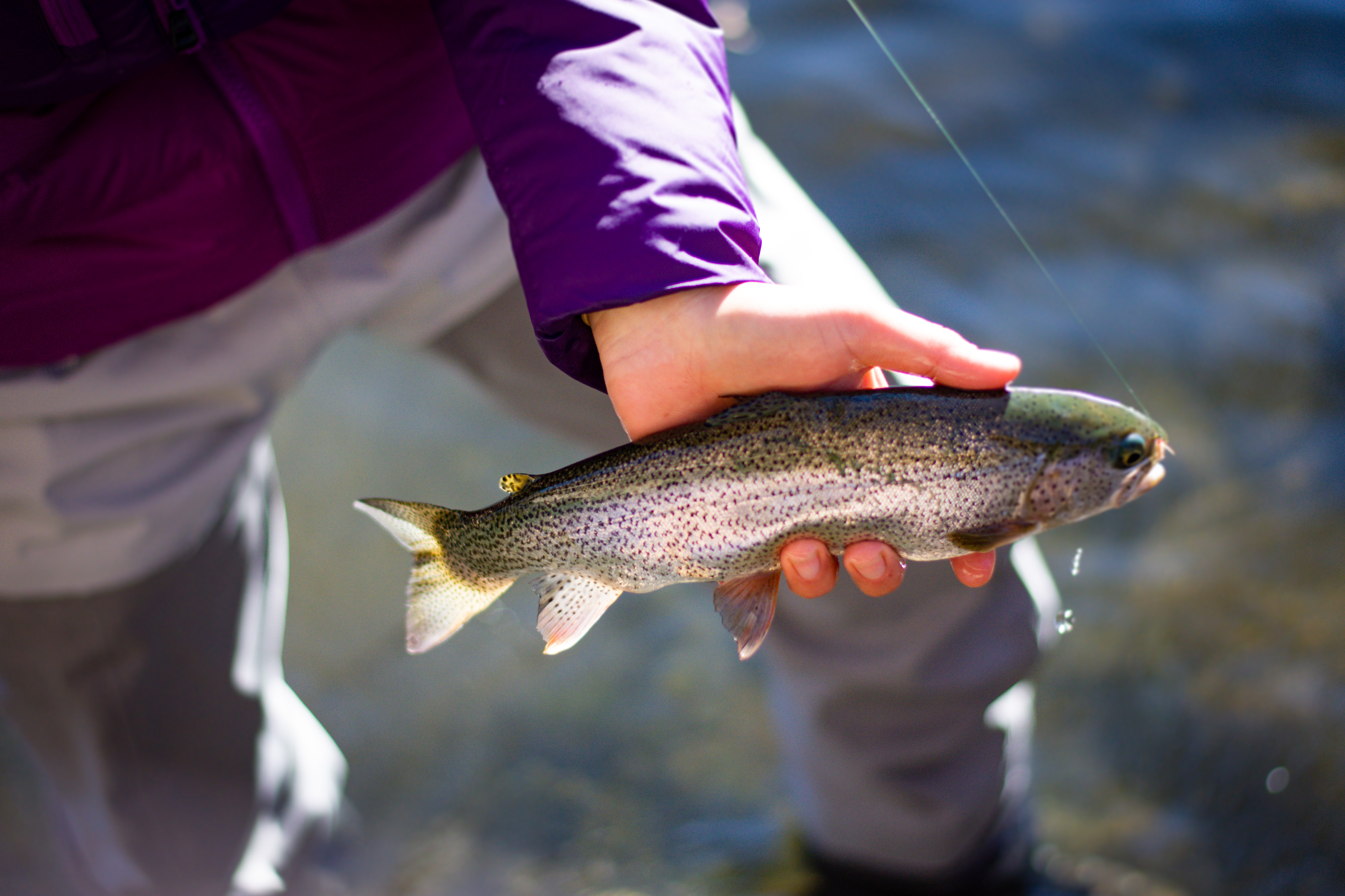 Weekend Chase: New Year Trout
